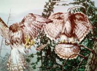 Птицы или лицо?