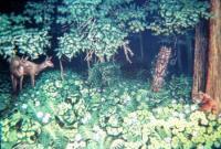 Найдите 10 тигров