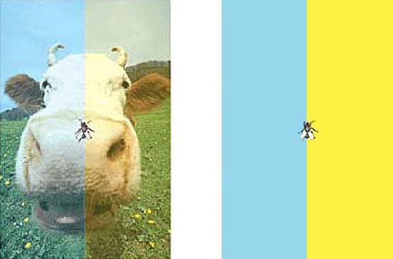 Разноцветная корова